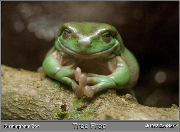 http://www.frogsonice.com/froggy/images/zoonet-frog.jpg