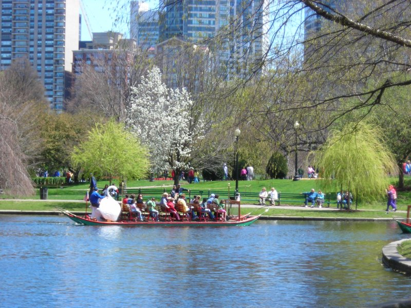 One Of The Famous Swan Boats